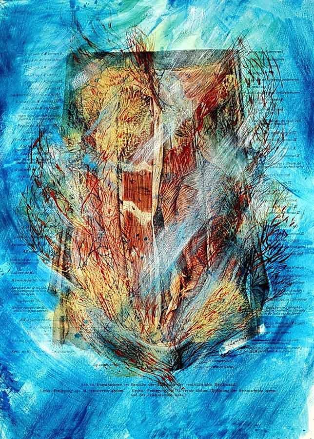 """""""Korallen im Meer"""" Präparation im Bereiche der Außenseite der ventrolateralen Bauchwand, Freilegung des M. transversus abdom)"""
